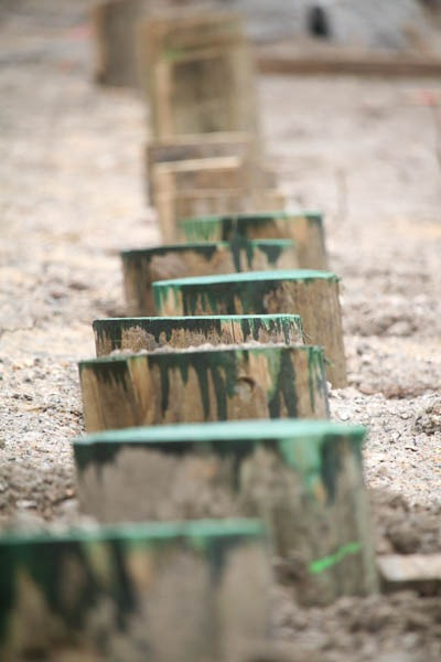 timber piles in the ground